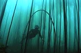 guided-kelp-forest-dives-cape-town